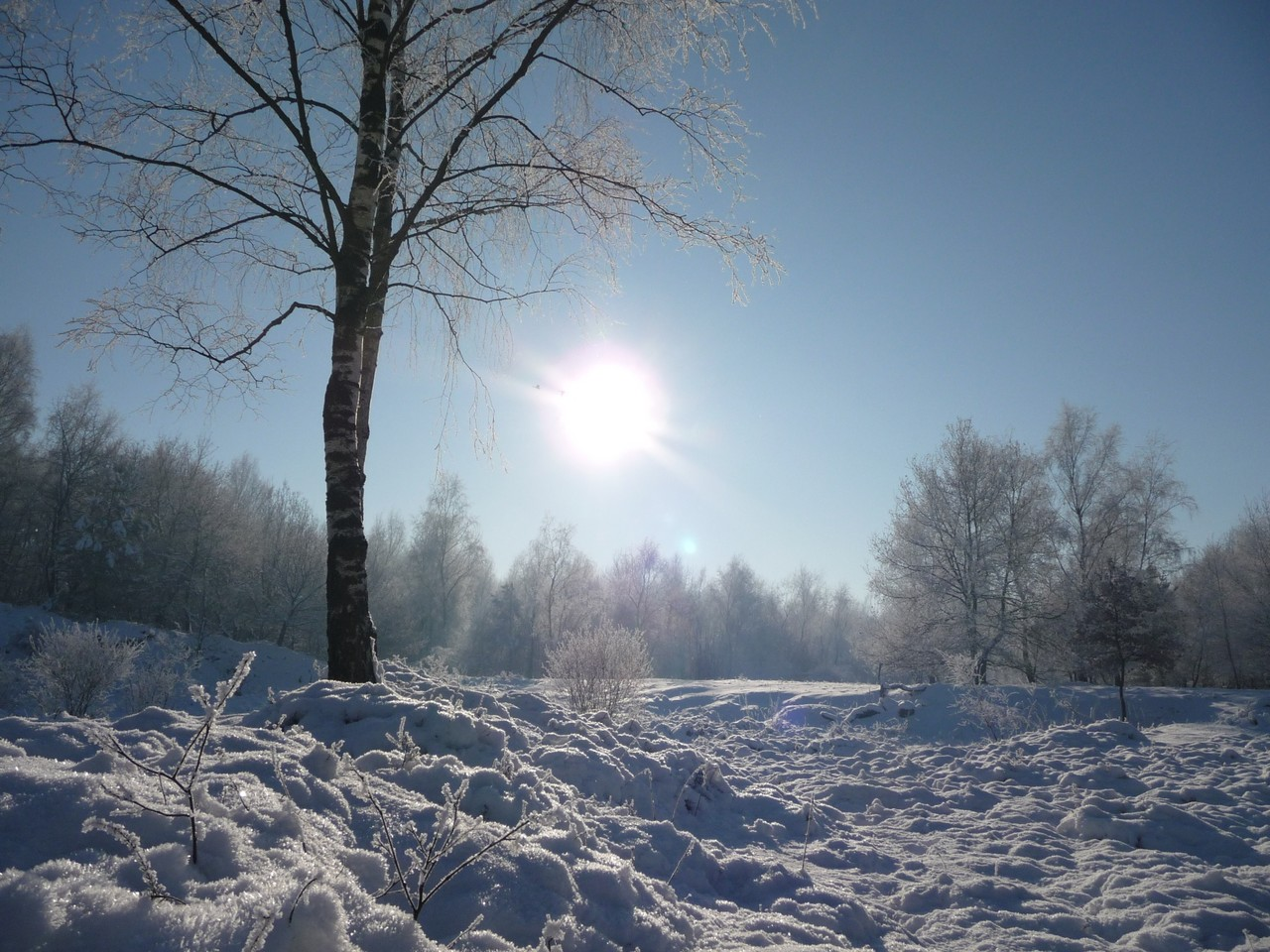 Unser Naturschutzgebiet Rütterberg im Januar 2009