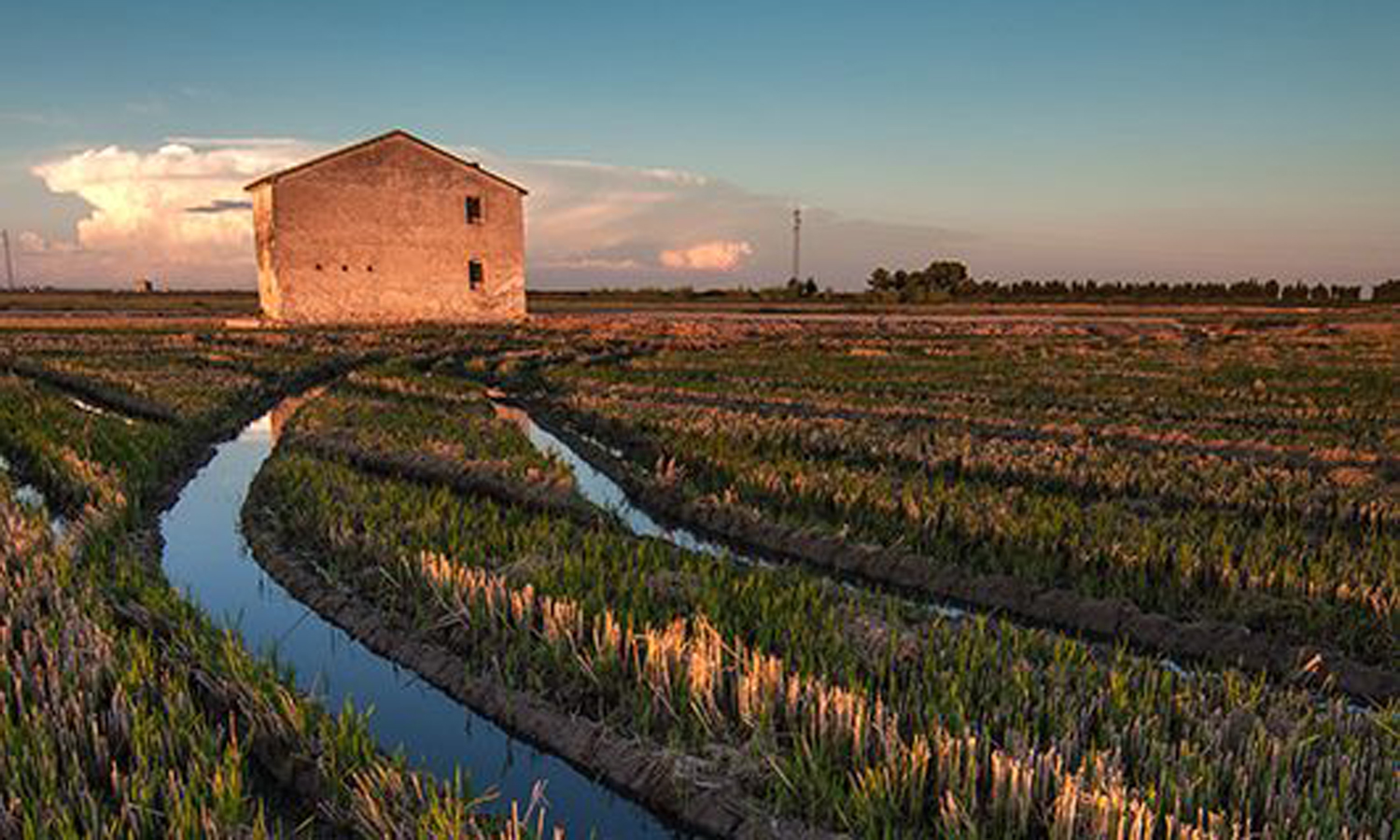 Arable crop farming near the Albufera lake