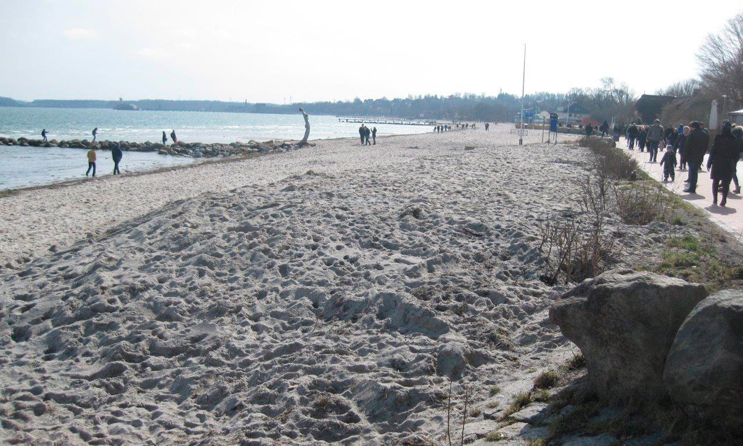 A finished dune system constructed by beach wrack, before being vegetated.