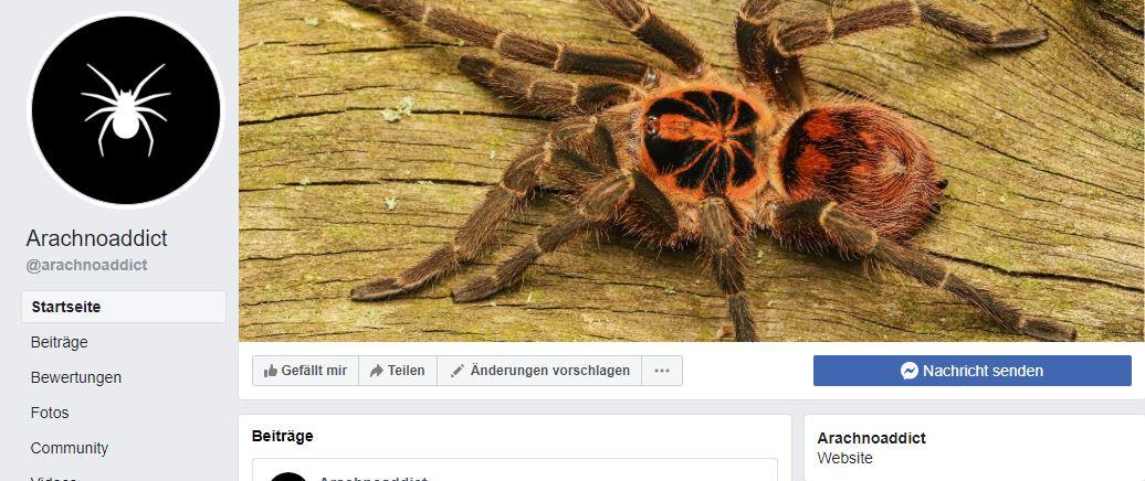 Arachnoaddict jetzt auch bei Facebook!