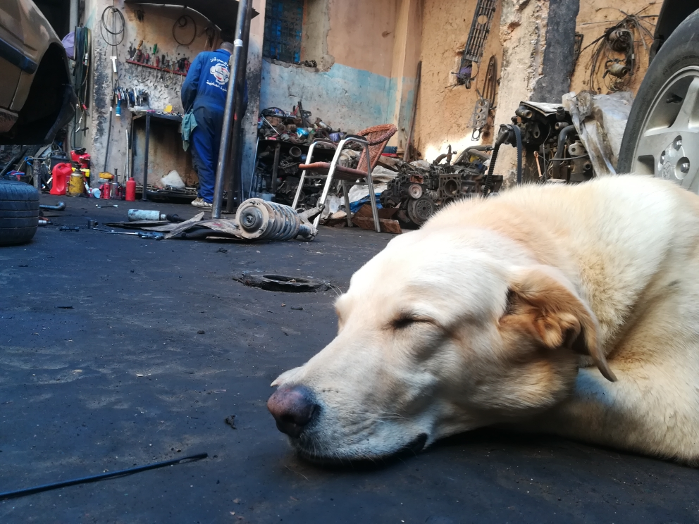 Aisha der Werkstatthund