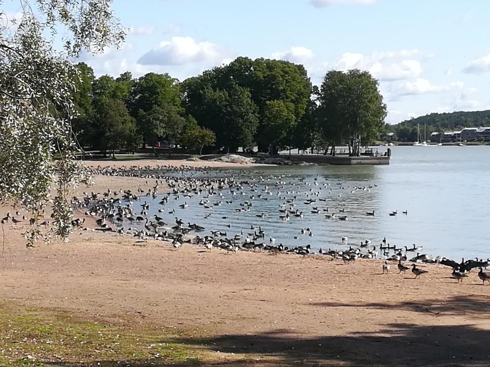Nahe unserem Schlafplatz in Turku