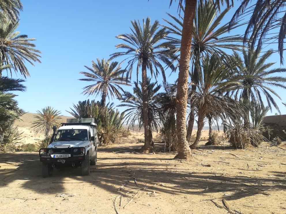 Biwak unter Palmen