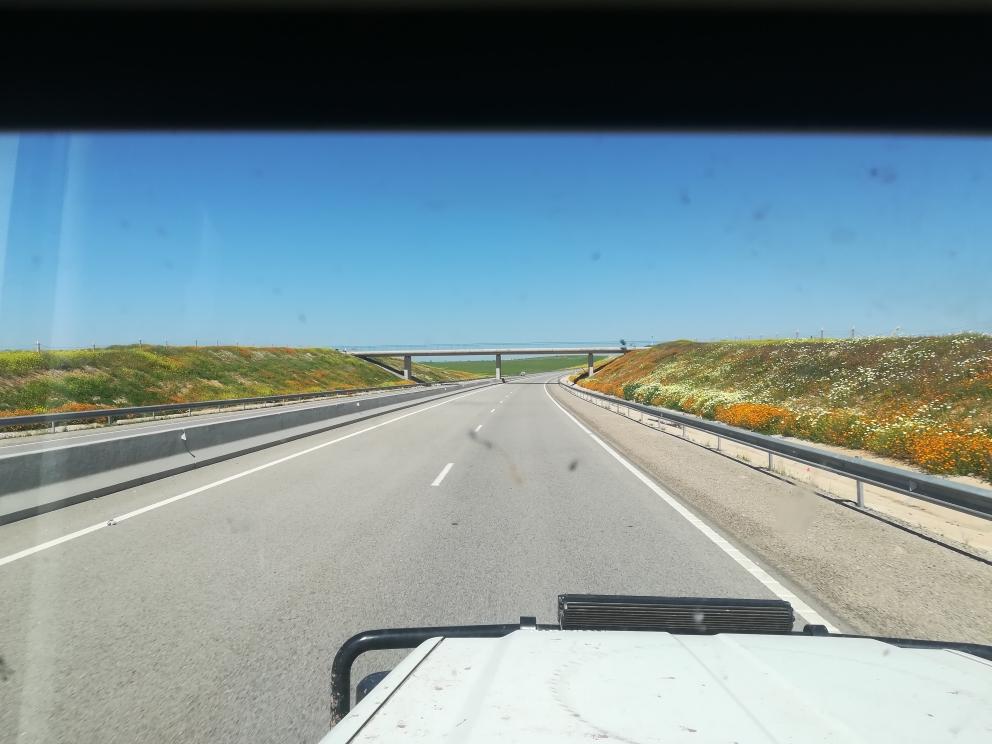 Blumenmeer auf der Autobahn