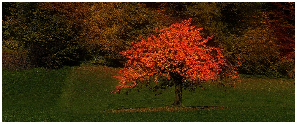 Baum im Herbst, Oberbalm, Bern