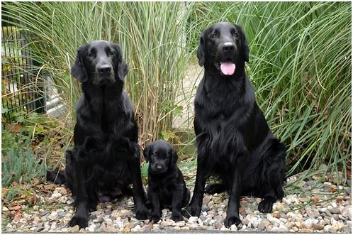 Mama Cannelle mit RoMéo und Papa Meo