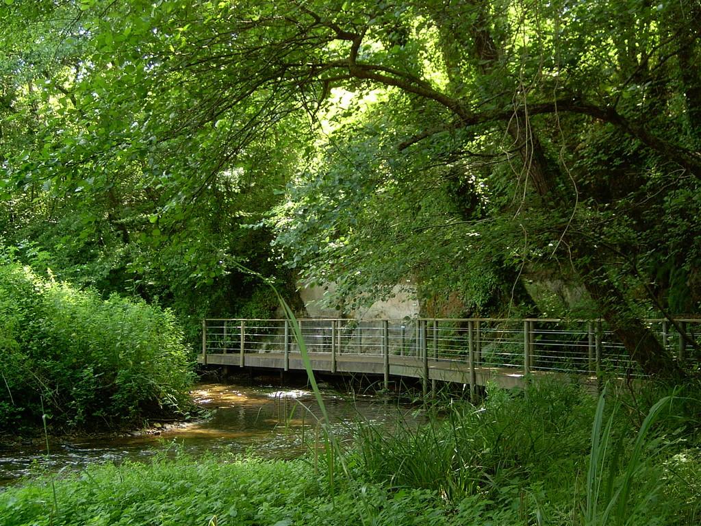 Le site de Bernachon, côté nature