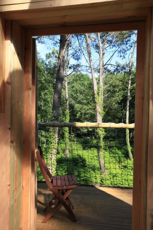 Une vue imprenable sur la forêt