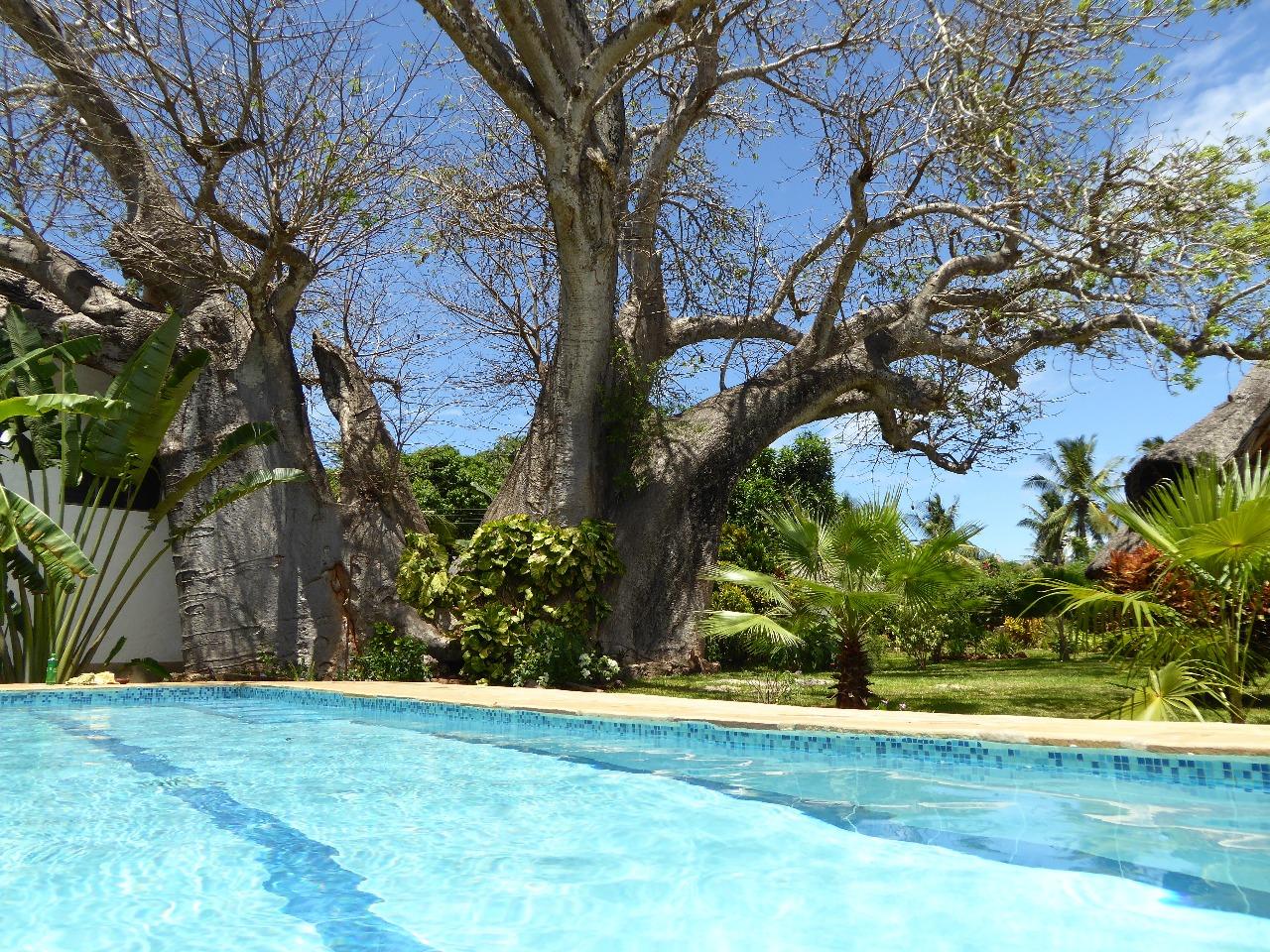 Pool im eigenen Garten
