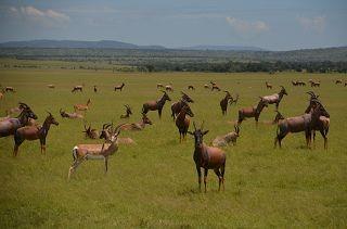 14  Tage Safari Kenia Angebote