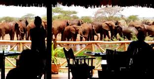 Tsavo East Ngutuni Lodge