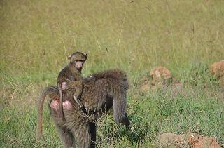 Safari in die Shimba Hills