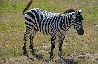 Fotosafari Kenia buchen