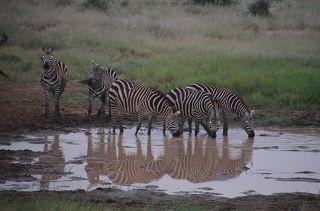 Kenia Safari Tsavo West