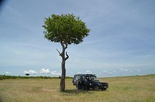 Jeep Safaris Kenia buchen