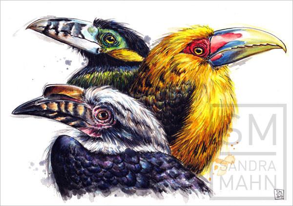 Tukane (verkauft) | toucans (sold)