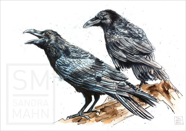 Rabe | raven