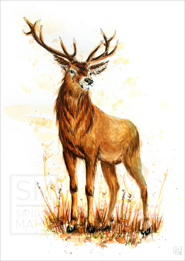 Rothirsch | red stag