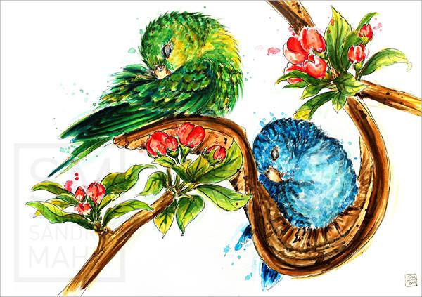 Katharinasittiche | barred parakeet