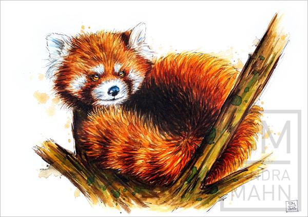 Roter Panda | red panda