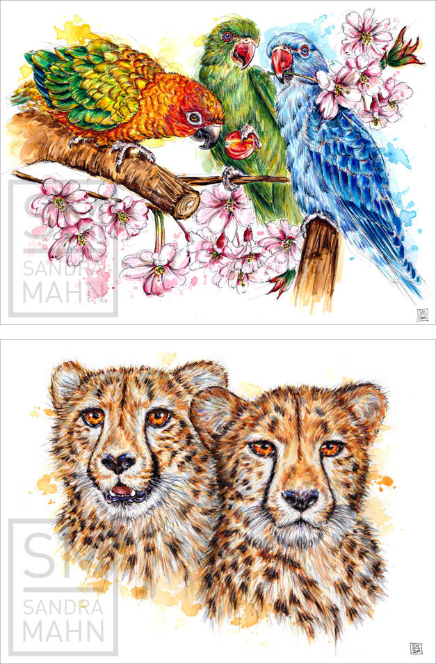 Sonnensittich & Halsbandsittiche - 2 Geparden | sun parakeet & rose-ringed parakeets - 2 cheetahs