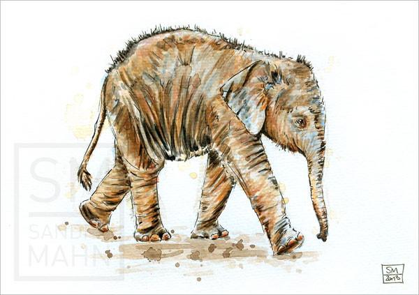 Elefant | elephant
