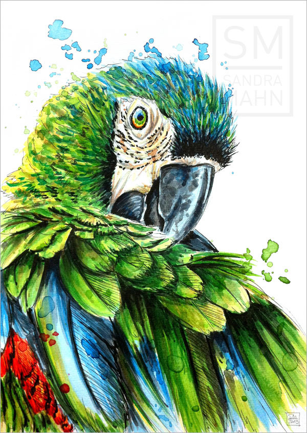 Papagei | macaw