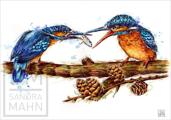 Eisvögel (verkauft) | kingfishers (sold)