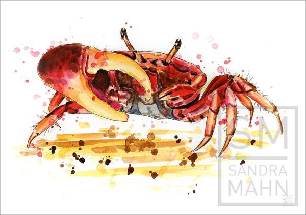 Winkerkrabbe (verkauft) | fiddler crab (sold)