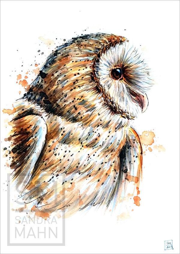 Schleiereule (verkauft) | barn owl (sold)