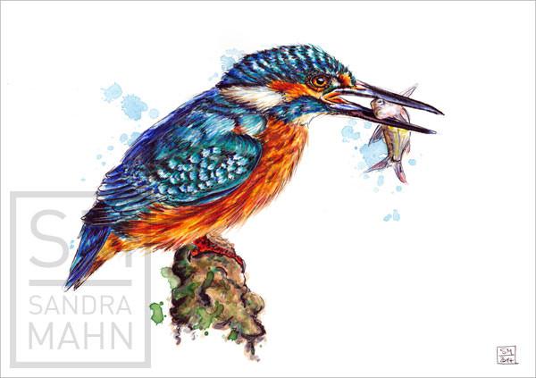 Eisvogel (verkauft) | kingfisher (sold)