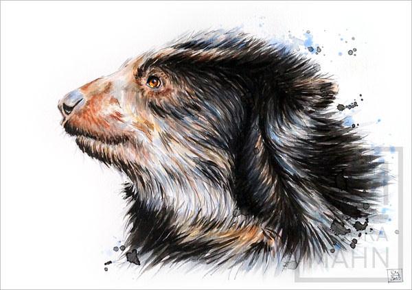 Brillenbär (verkauft) | spectacled bear (sold)