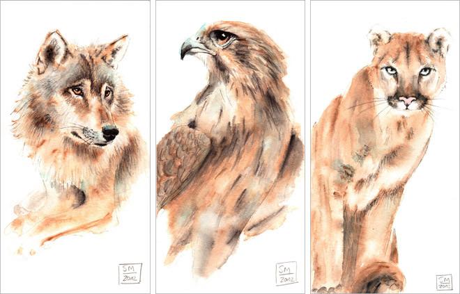 Wolf Falke Puma | wolf falcon cougar