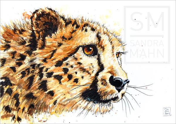 Gepard | cheetah