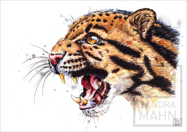Nebelparder | clouded leopard