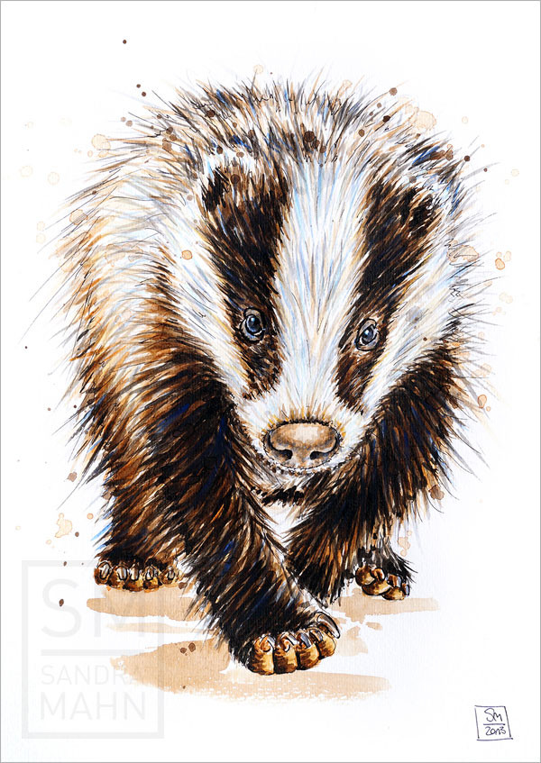 Dachs (verkauft) | european badger (sold)