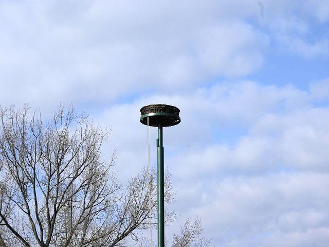 Letzte Storchenpaar brütete 1996 in Seestermühe auf dem Reeddach der Familie Meinert