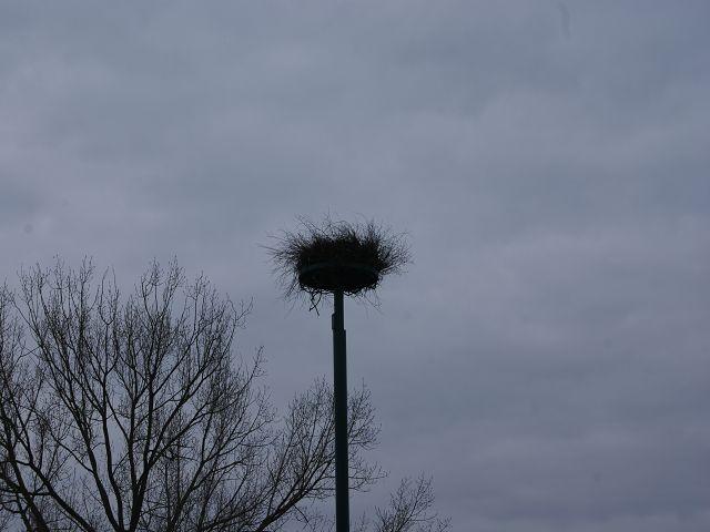 Das Neue Nest ist Fertig am 28.03.2010