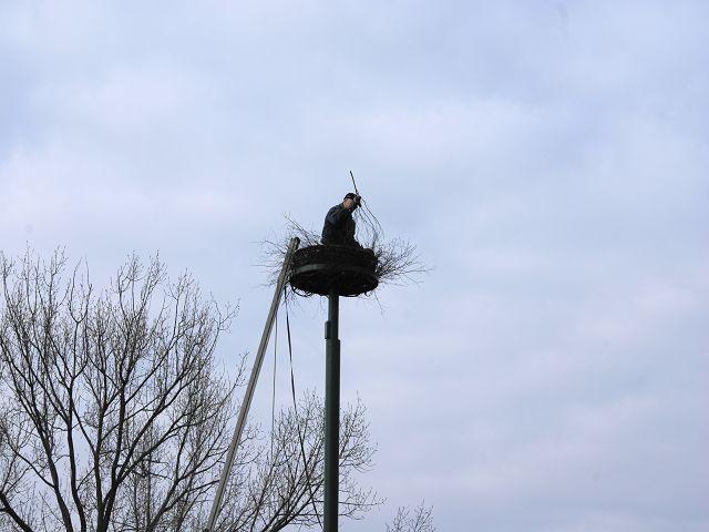 Vollflechten des Nestes mit Birken und Weidenbusch