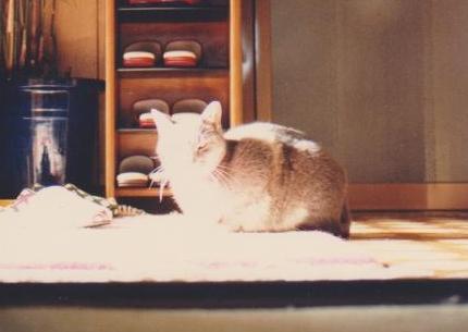スタッフ紹介 座ったミコの写真