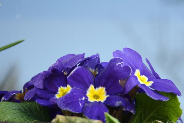 Fit in den Frühling mit der Übung des Monats März