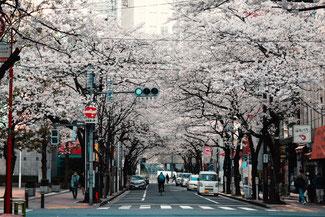 さくらい行政書士事務所 日本に永住するための条件