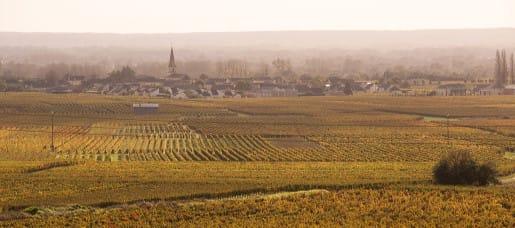 Vignoble de Saint-Nicolas de Bourgueil