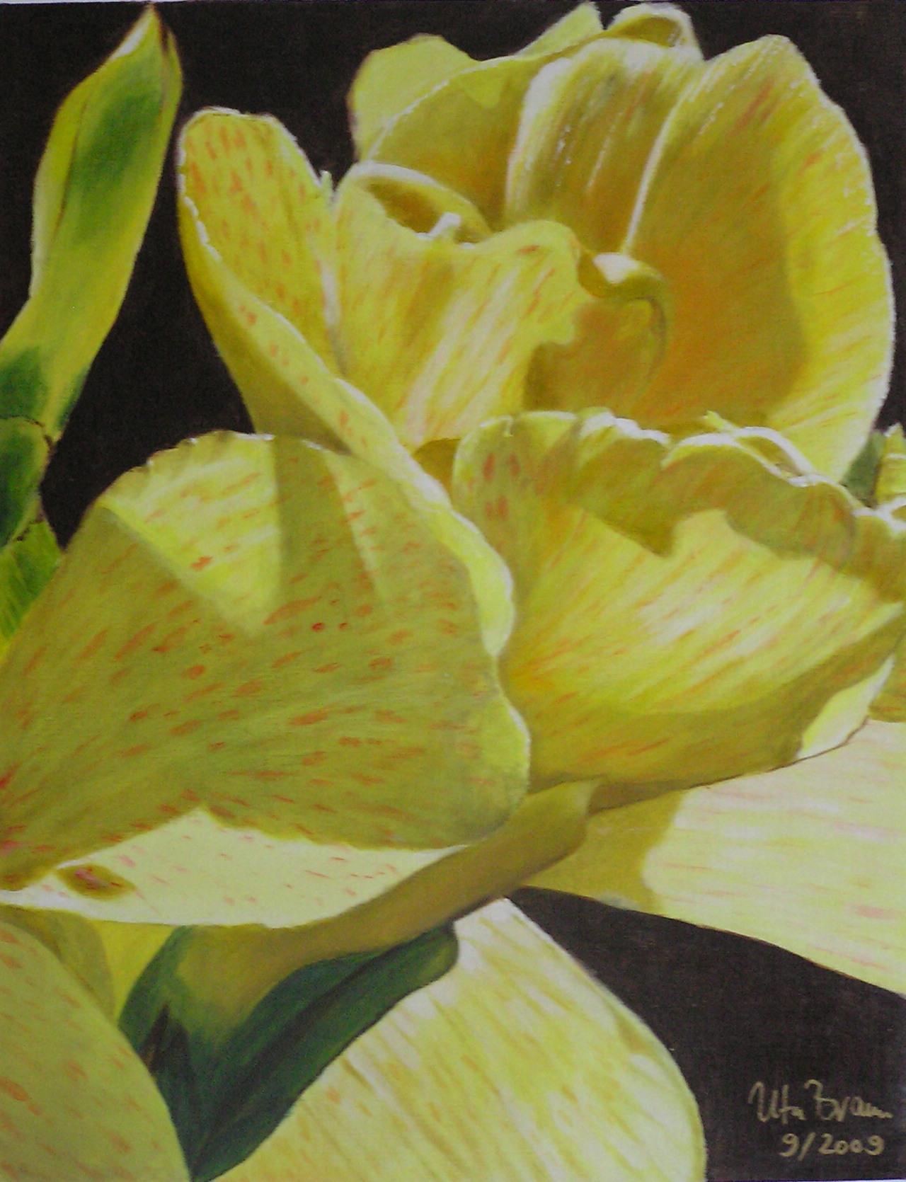 Blütenstruktur gelb- Canna (40 x 50)