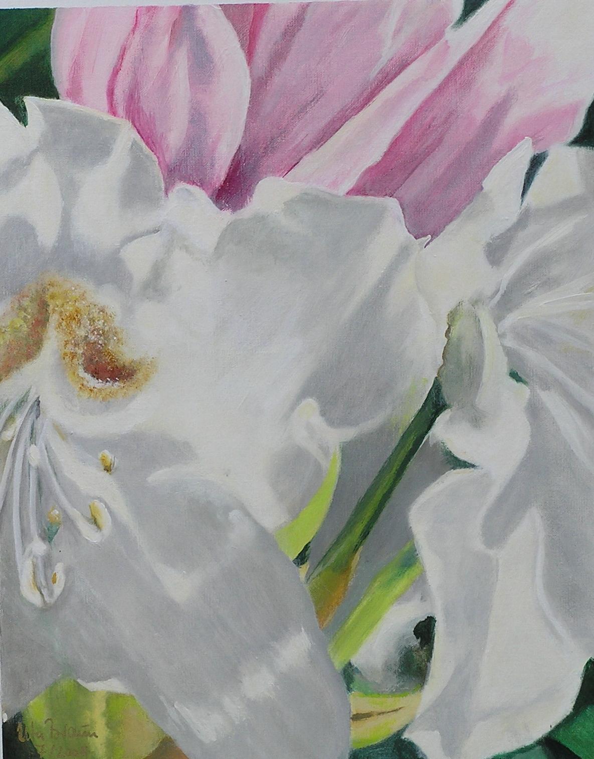 Blütenstruktur weißer Rhododendron (1) (40 x 50)