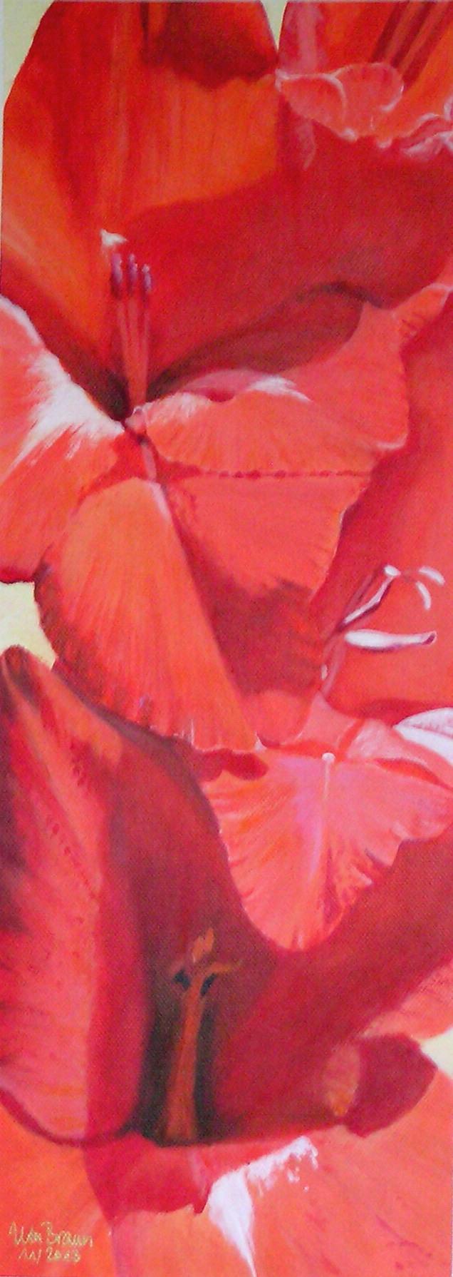 Blütenstruktur rot- Gladiole (20 x 50)
