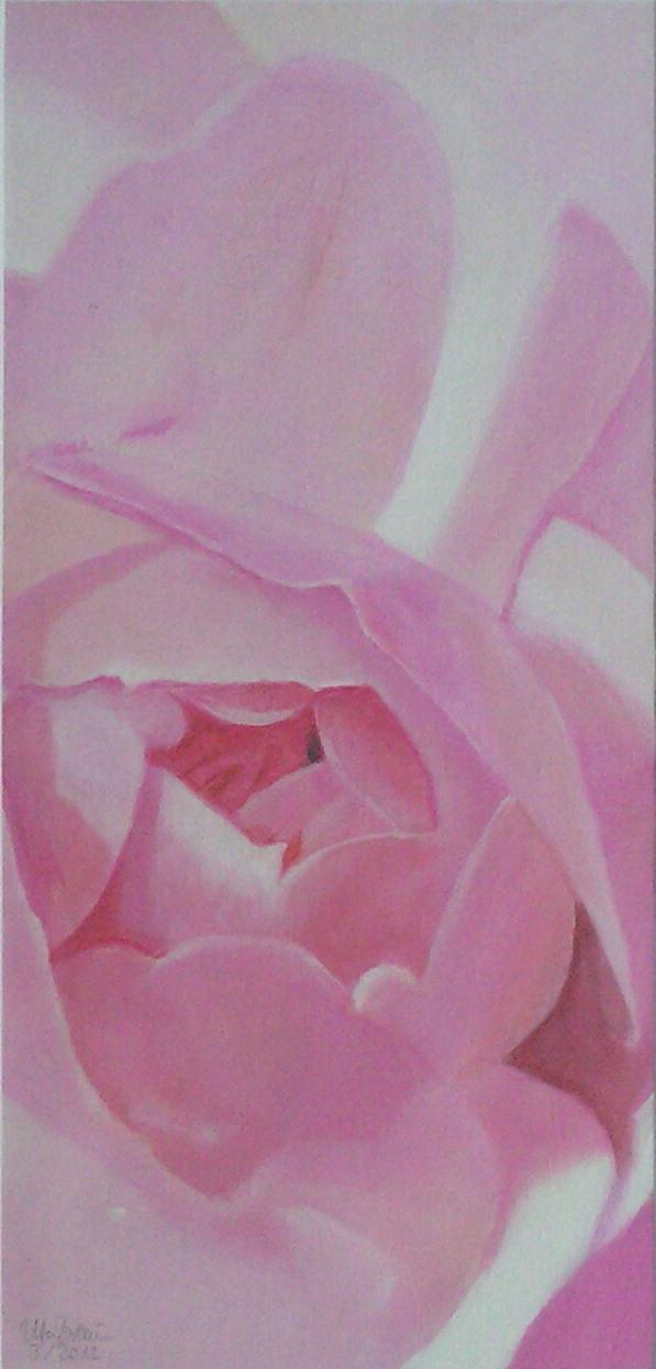Blütenstruktur rosé- Augustrose (2) (17 x 36)