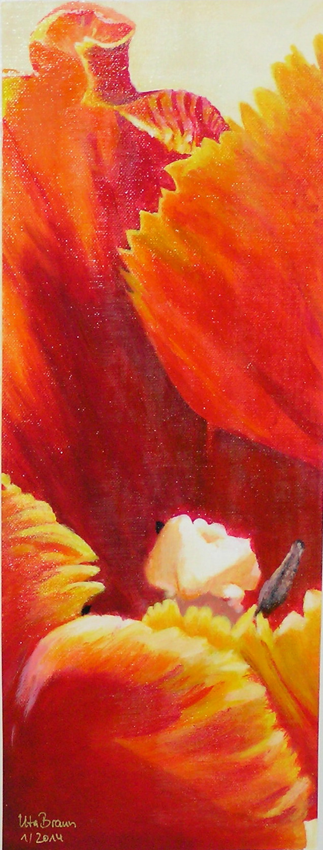 Blütenstruktur rot- Tulpe (20 x 50)