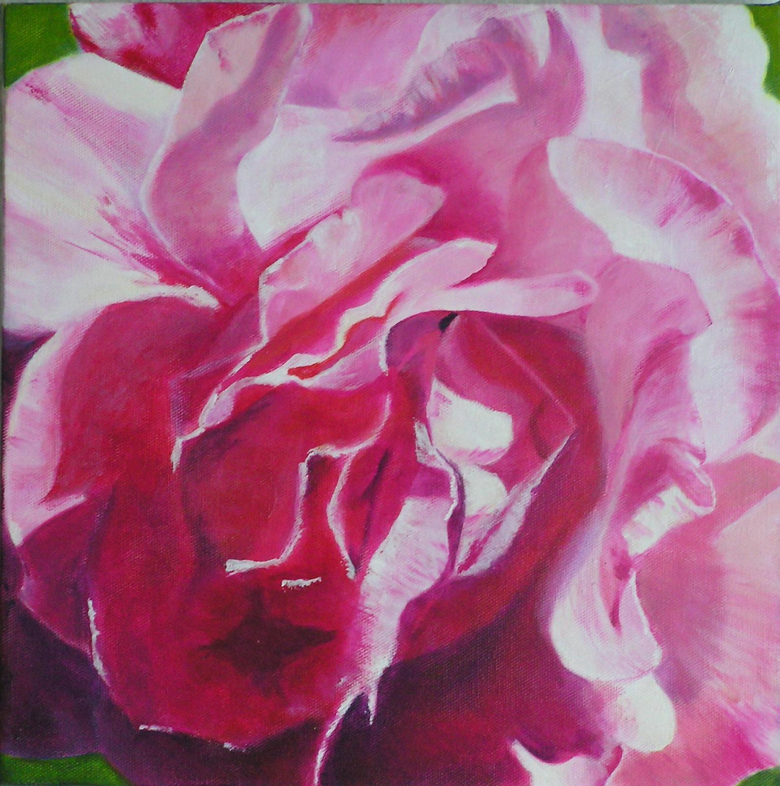 Gesicht einer Rose
