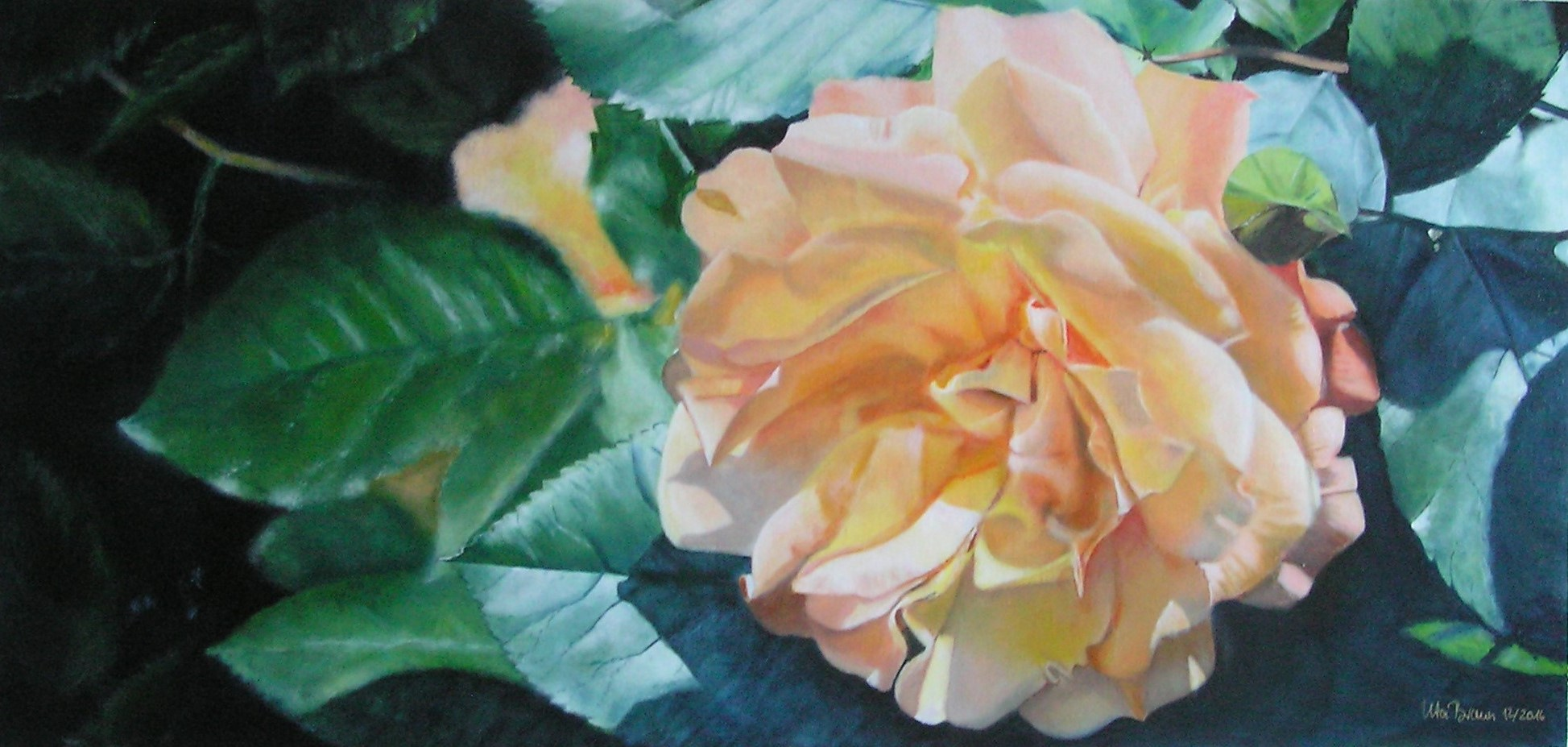 Buschrose gelb-orange